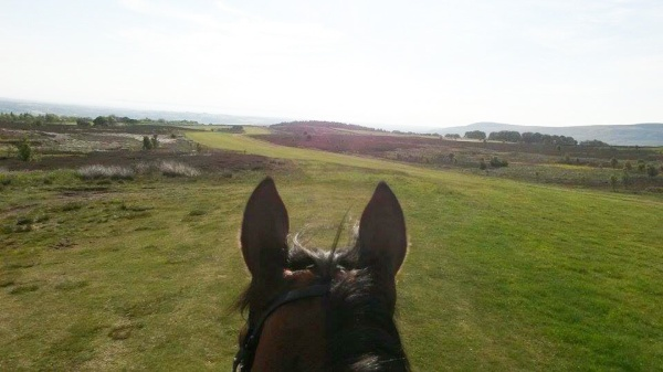 The view from Simon's horse up the High Moor this morning