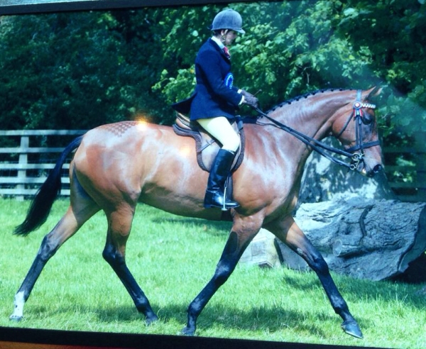 Julie Staveley and the successful Racehorse turned Show horse - Misty Gem