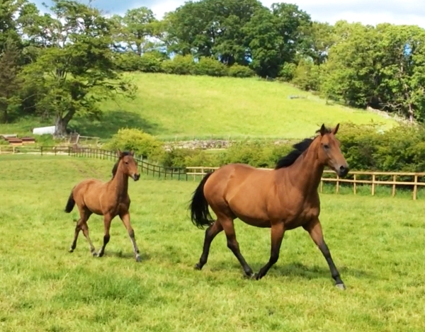 5x winner 'Marmot Bay' and her colt foal 'Rebel' by Swiss Spirit
