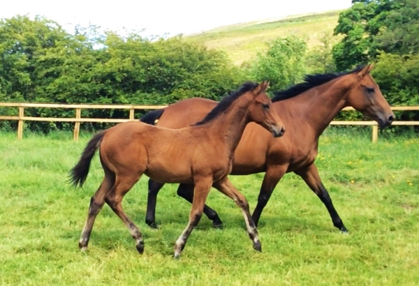PKR winner of the future? Colt foal by Swiss Spirit x Marmot Bay