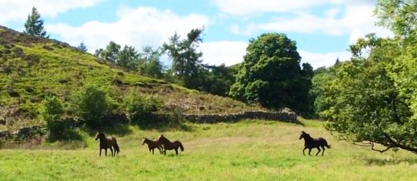 Horse paradise!