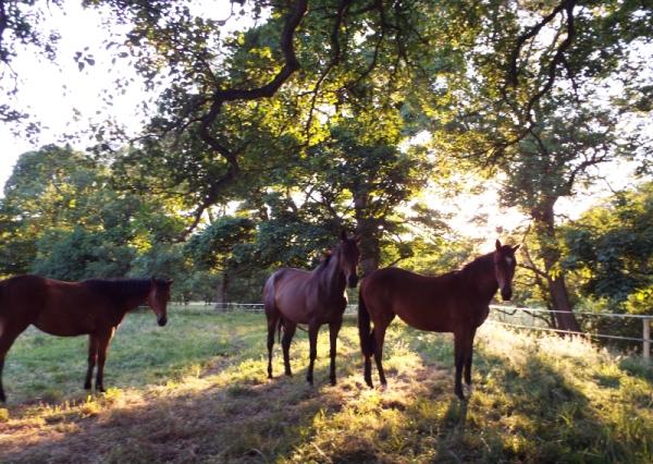 horses sun 2 small