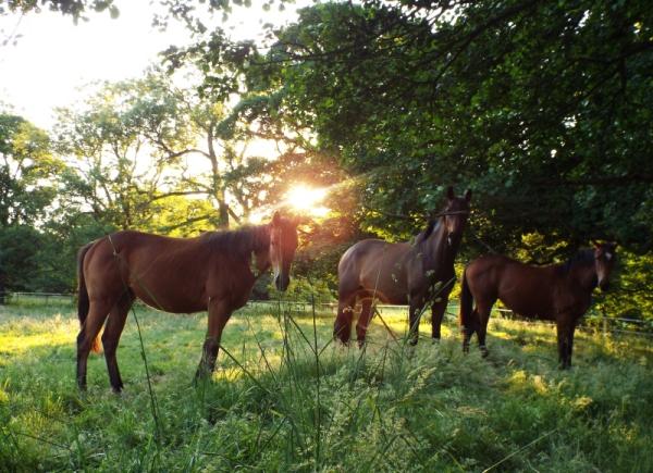 horses sun small 4
