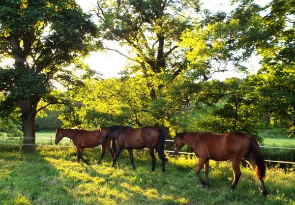 horses sun small