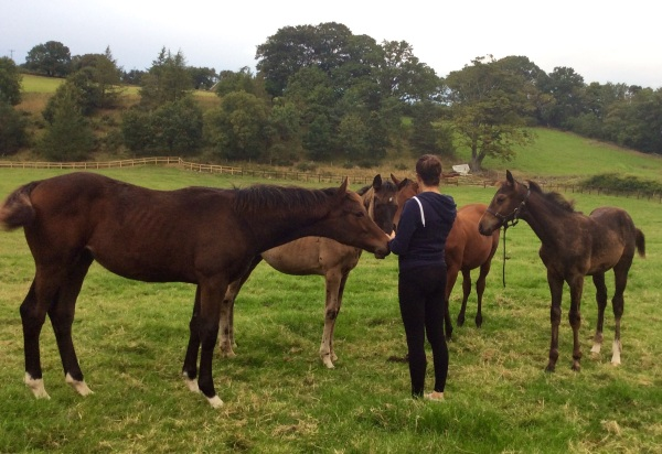 The four colt foals with our tall Robin des Champs  Nearest