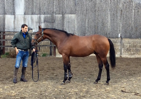 Phil with the fabalous looking Zoffany yearling