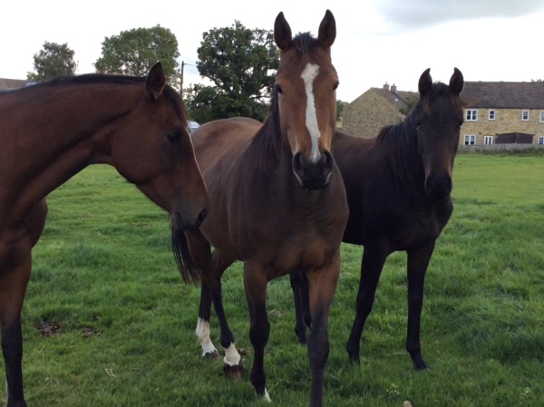 Centre - legend of a Lady out of Lady Chapp x Flying Legend, and on the right, Dares to Dream out of Miss McGoldrick x Beneficial