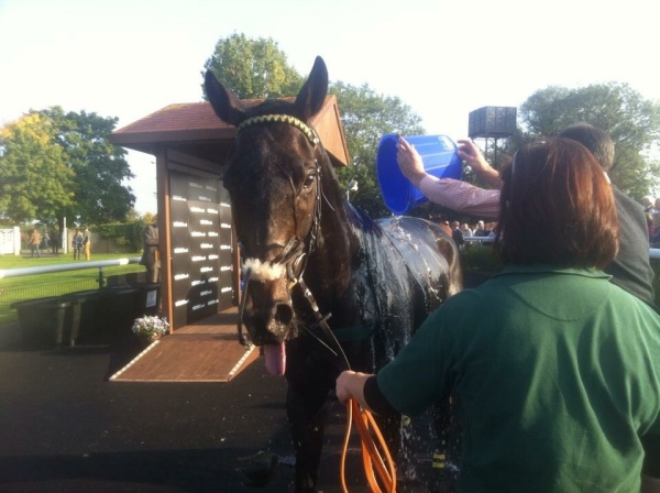 A wash off for Factor Fifty after the race