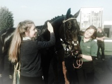 A pat for Frankie at Huntingdon today