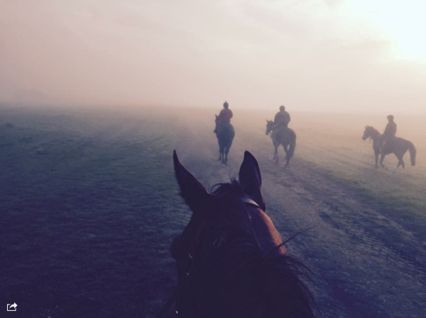 Morning Exercise - a great photo of our string from horseback by Kelly Cochrane