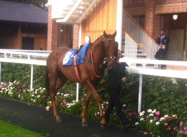 Call it On at York - he was that keen in the paddock he led Lauren up, not the other way round!