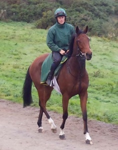 New horse, Whitchurch with Ross Turner