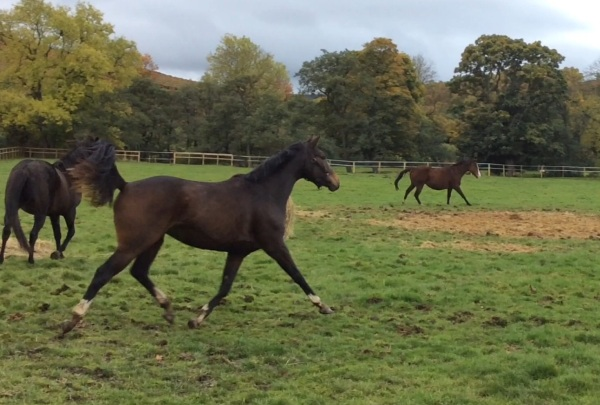 New filly with her Dam, Royalty in the background - foaled before Royalty joined us.