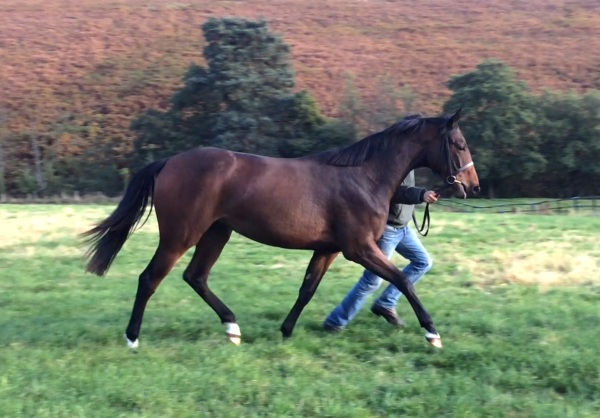 The Equiano filly