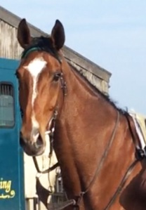 The handsome head of Courtown Oscar