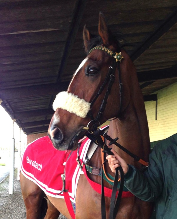 Today winner Courtown Oscar, photo by Megan Dent