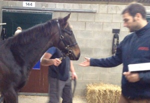 Phil with the sale topper when we were inspecting him prior to his slot in the sale ring