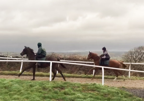 Yearlings up the 3f canter