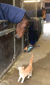 new horse at Dibble liking the look of 'Top Cat'