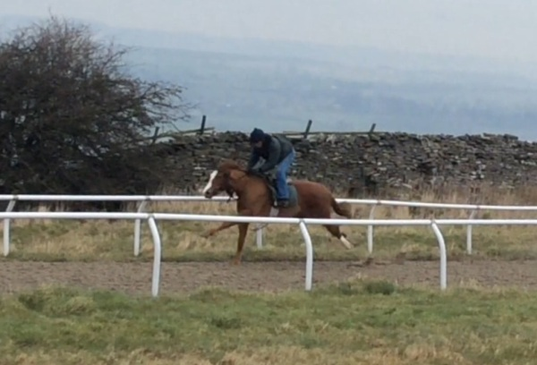 The Arcano filly breezing up