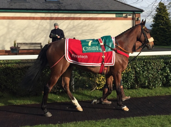 Courtown Oscar in the paddock