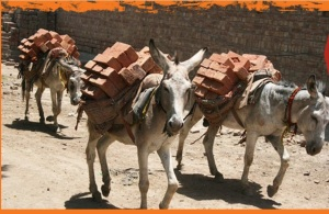 The brick kiln donkeys helped and veterinary treated by The Brooke