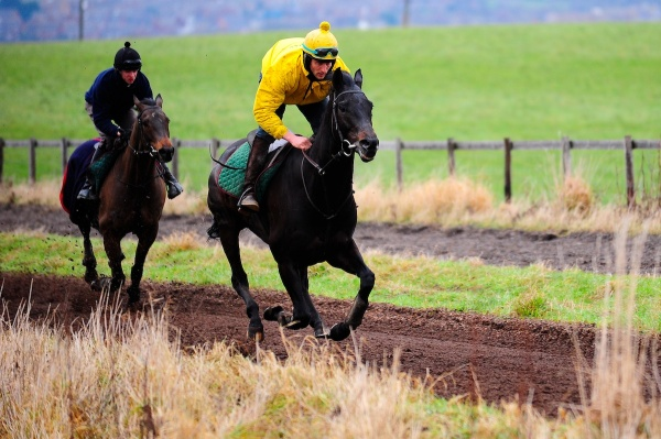 Phil on Colonel Sherman up the gallops