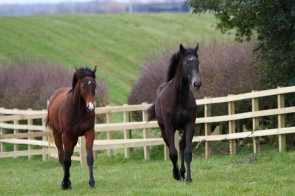The Mastercraftsman And Shirocco colts