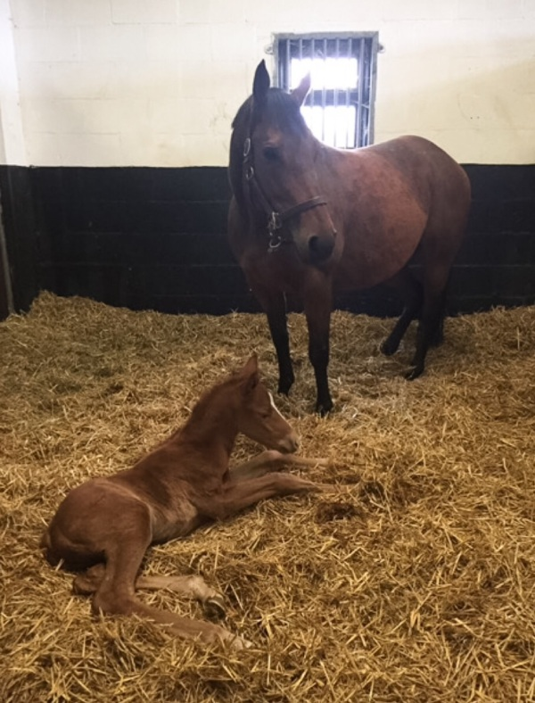 Marmot Bay and her Garswood colt