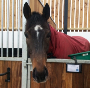 foal, area 1a ipad up to end april 133