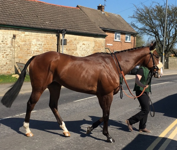 Triple Eight on his way to the paddock