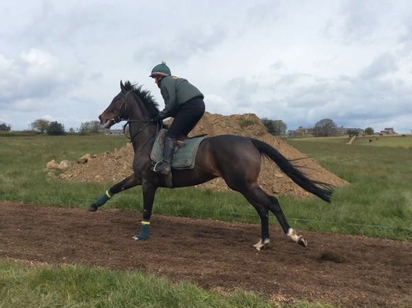 Keep Up cantering with enthuisasm yesterday