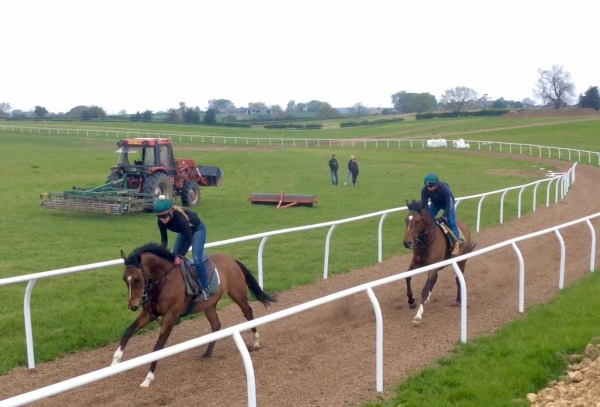Two rails now on our bottom gallop - Kiwayu leads Agglestone Rock this morning at first lot