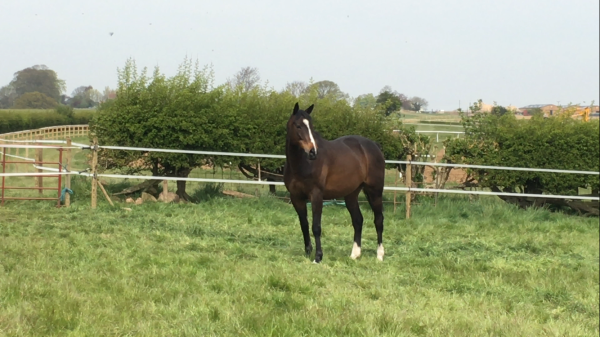 My boy Platinum - lovely to see him out in the fields here