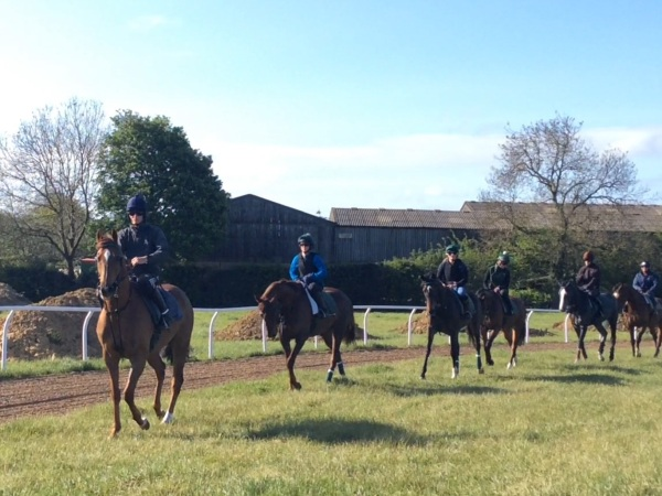 Rocky Two leading the string at exercise