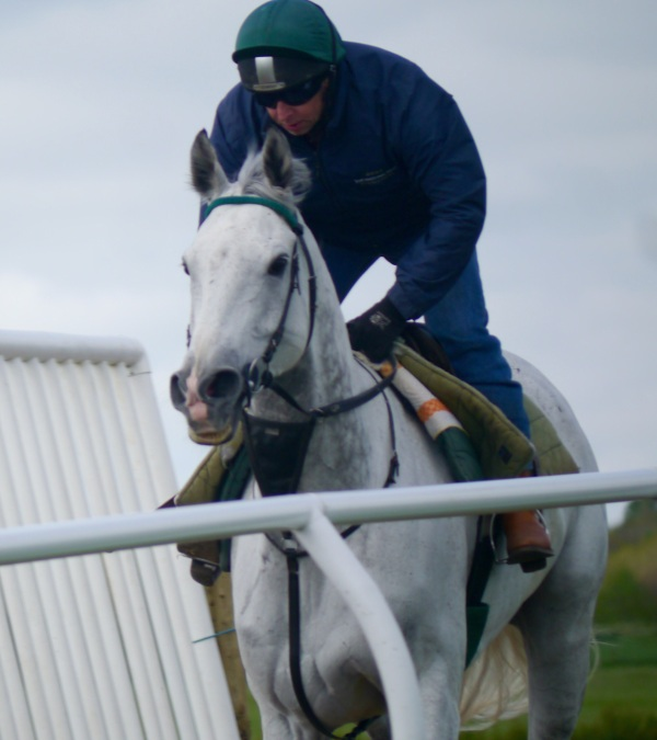 King's Grey and peter in action - photo by Sue Clarke one of his Owners