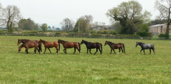 The geldings on the move