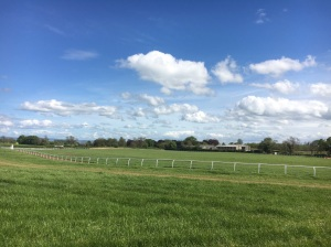 The round gallop looking good in the sunshine