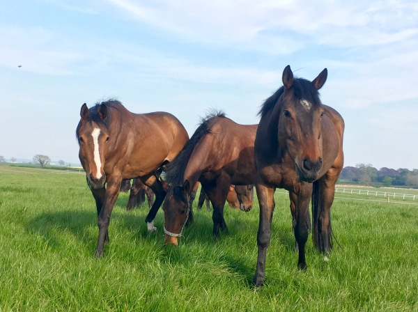 Lady Buttons nearest the camera, her 3 year old half sister on the left