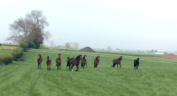 The mares on the move!