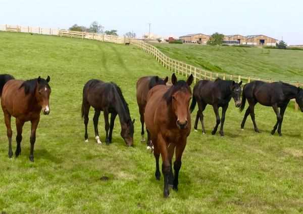Marmot Bay x Swiss Spirit (Rebel) in front of the yearling colts