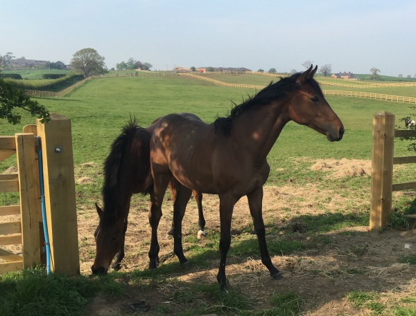 One for the future - Andorn's only TB offspring 'Andorn's Legacy'