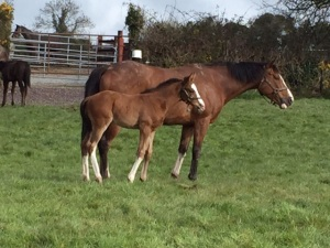 Lady Chloe with her Authorized colt