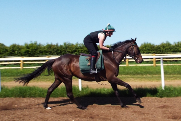 Discay cantering