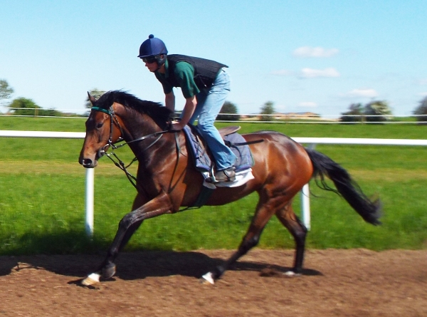 The unnamed 2 year old Equiano filly