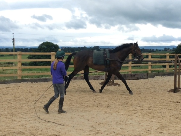 Bertie Blake on the lunge