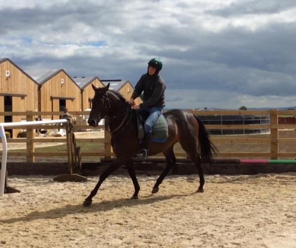 Bertie Blake the new Kirby Club Partnership horse