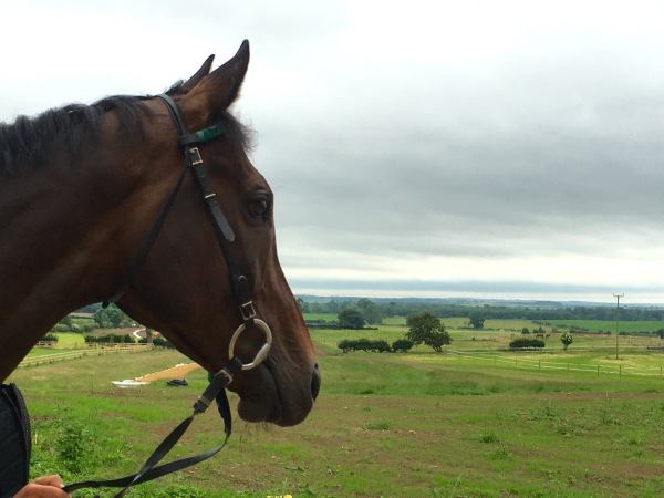 Factor Fifty looking down the fields at Green Oaks