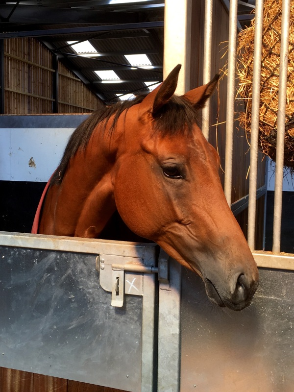 2 year old Equiano filly, True Ballew