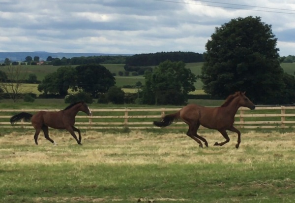 More horses at play yesterday